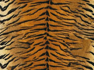 Aurelio tiger soft till malbas